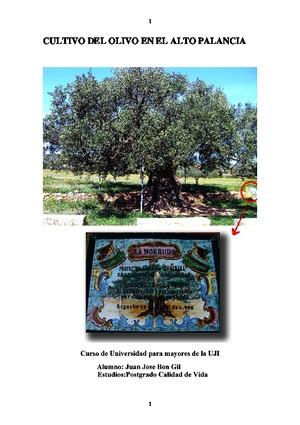 Cultivo-del-olivo-en-el-Alto-Palancia